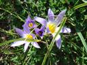 Frisch wie der Frühling